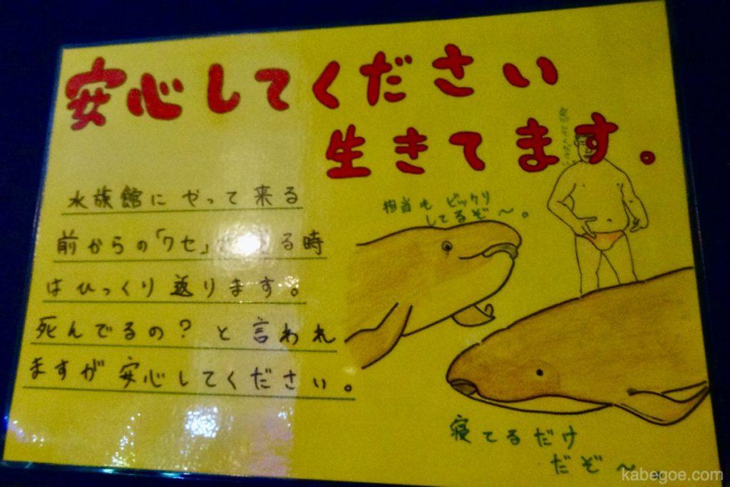 Urusan terkini Akuarium Takeshima