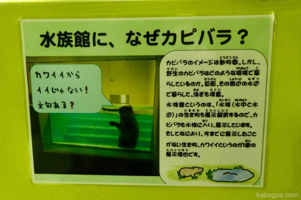 Kapibara di Akuarium Takeshima
