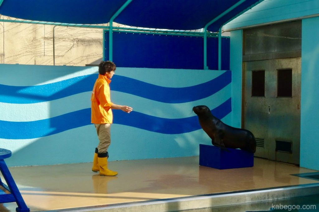 Pertunjukan Singa Laut Akuarium Takeshima