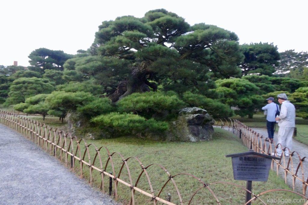 栗林公園の鶴亀松