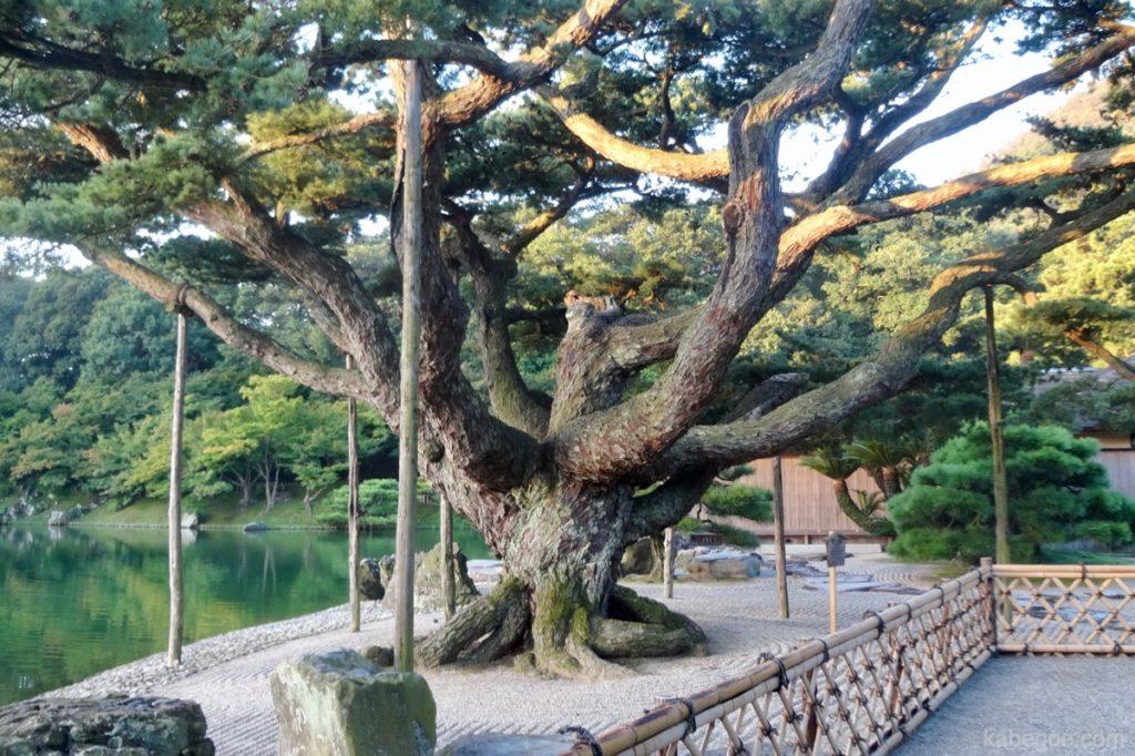 栗林公園の根上り五葉松(ねあがりごようまつ)