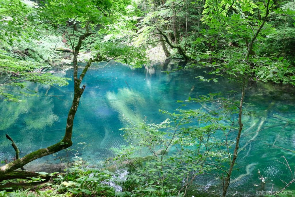十二湖の沸壺の池