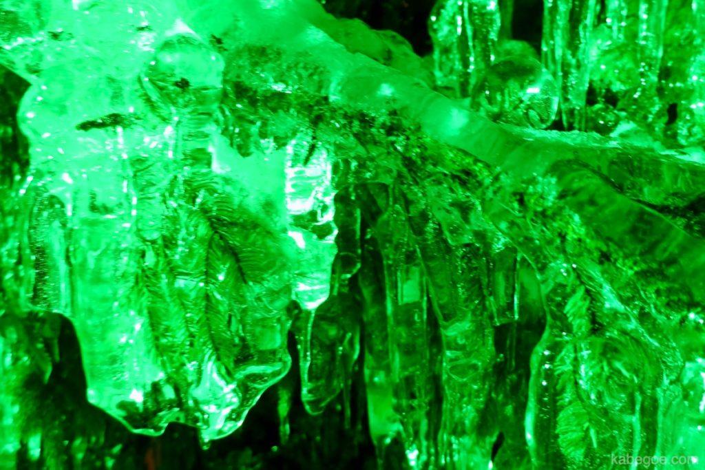 氷濤まつりの松の木