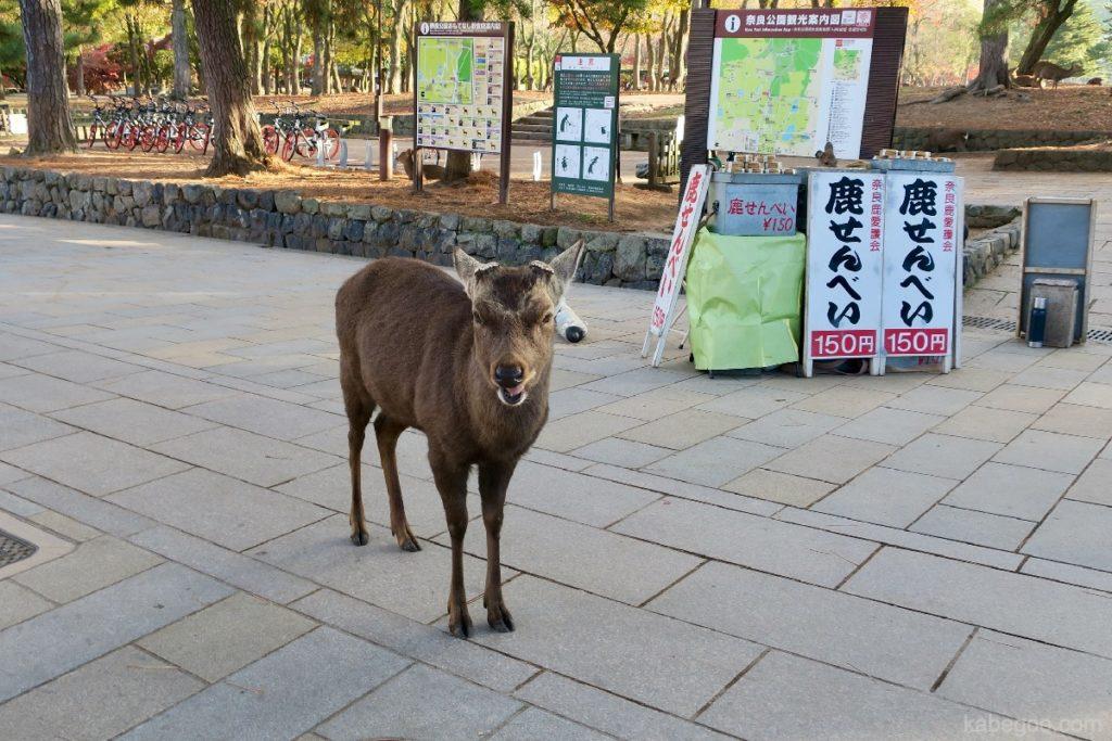 奈良公園の怒っている鹿