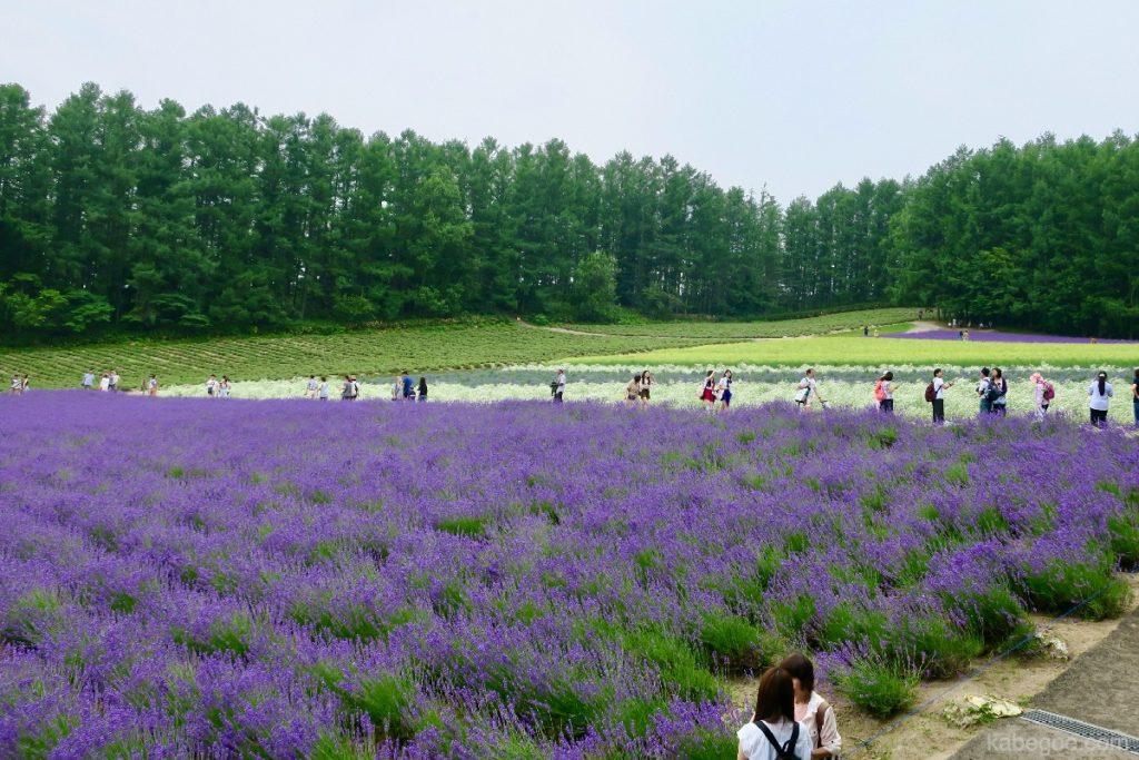 ファーム冨田のラベンダー畑