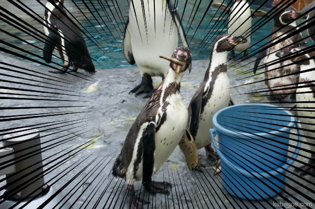 旭山動物園のもぐもぐタイム