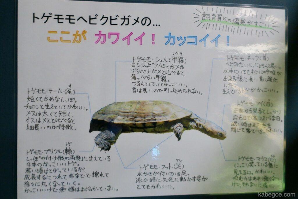 北の大地の水族館のトゲモモヘビクビガメの解説