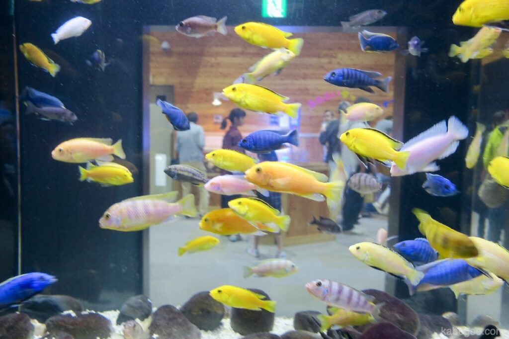 北の大地の水族館の出口