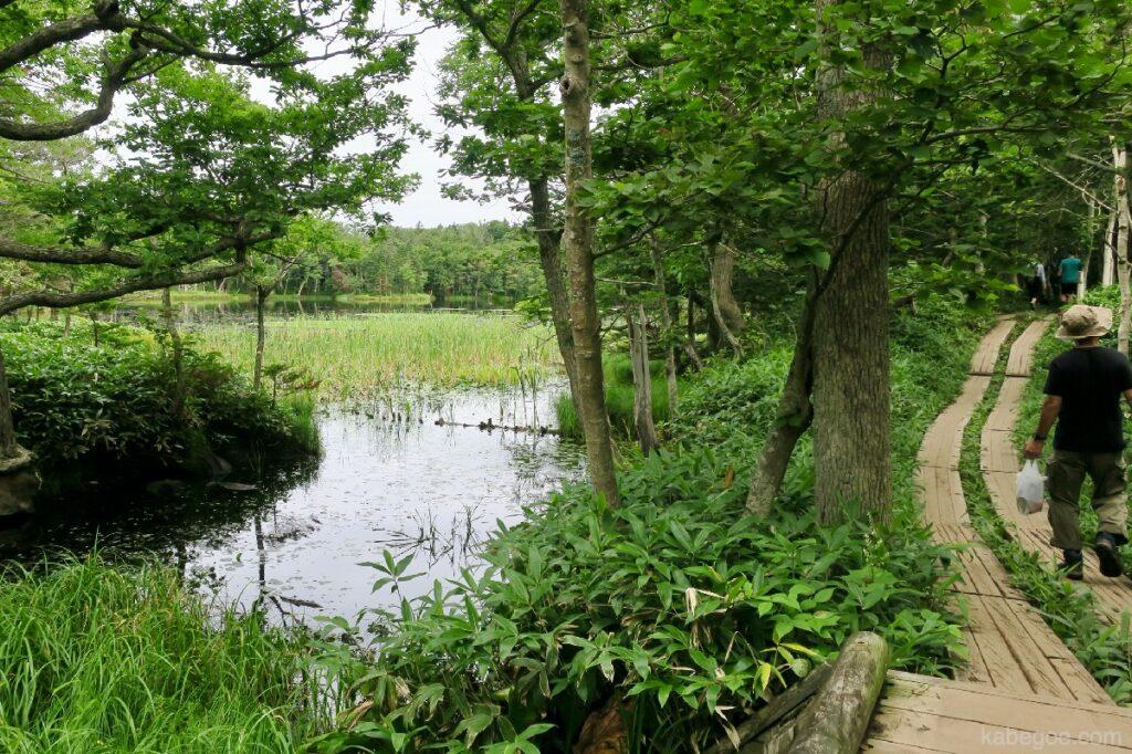 知床五湖の道