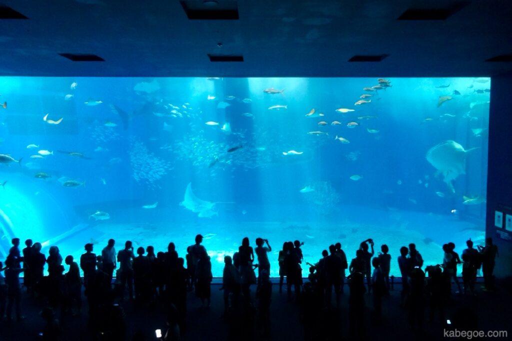 美ら海水族館の「黒潮の海水槽」