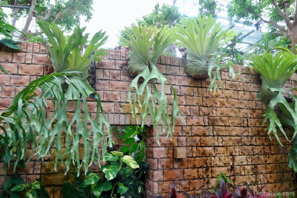 熱帯ドリームセンターの植物