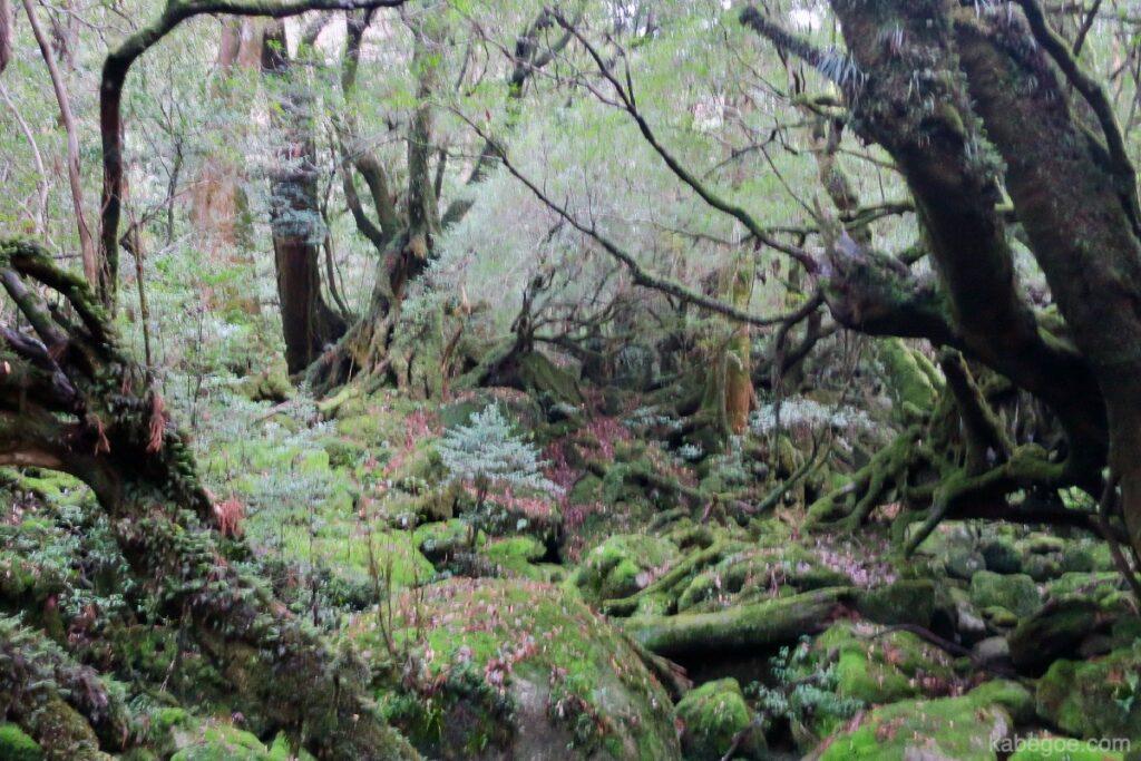 屋久島の白谷雲水峡