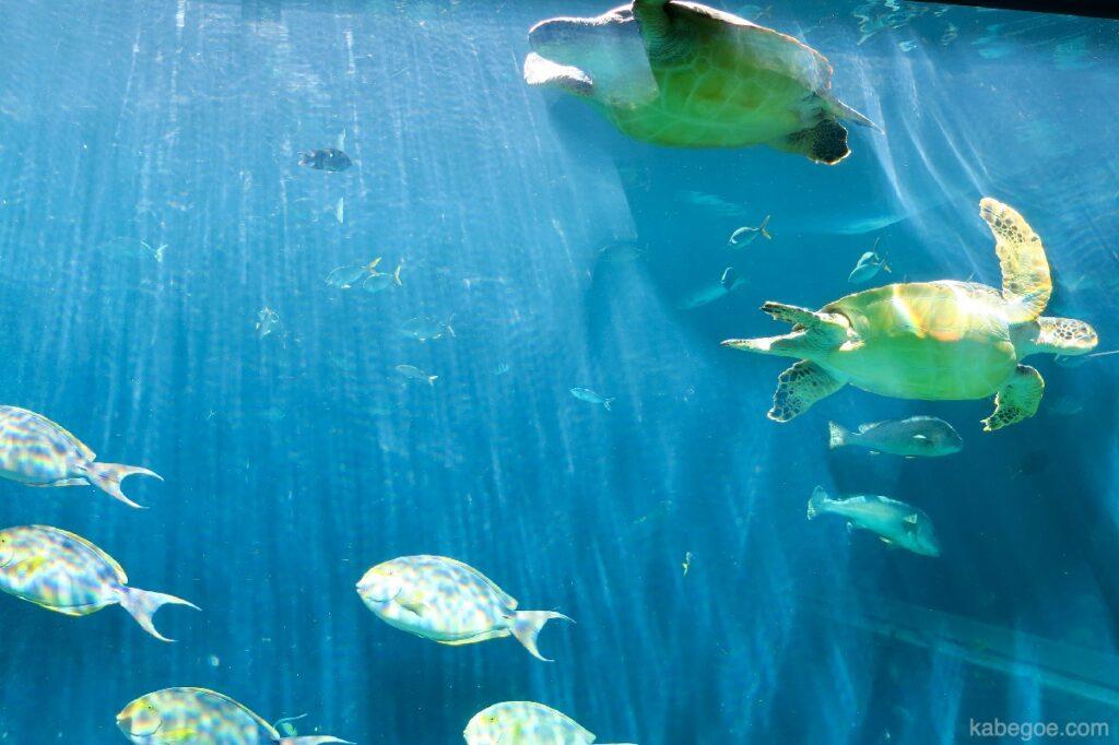 Grande acquario nell'acquario di Hakone