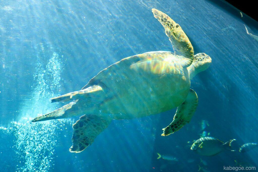 Tartarughe marine nell'acquario di Hakone