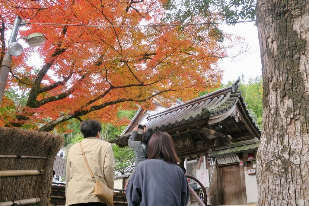 Daun musim gugur di Kuil Suzumushi