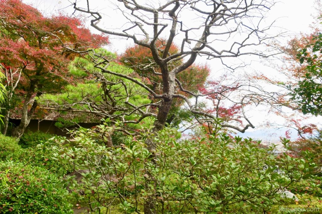 Taman Kuil Suzumushi
