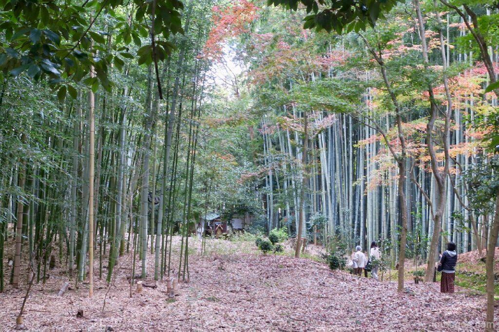 Bambu Jizo-in