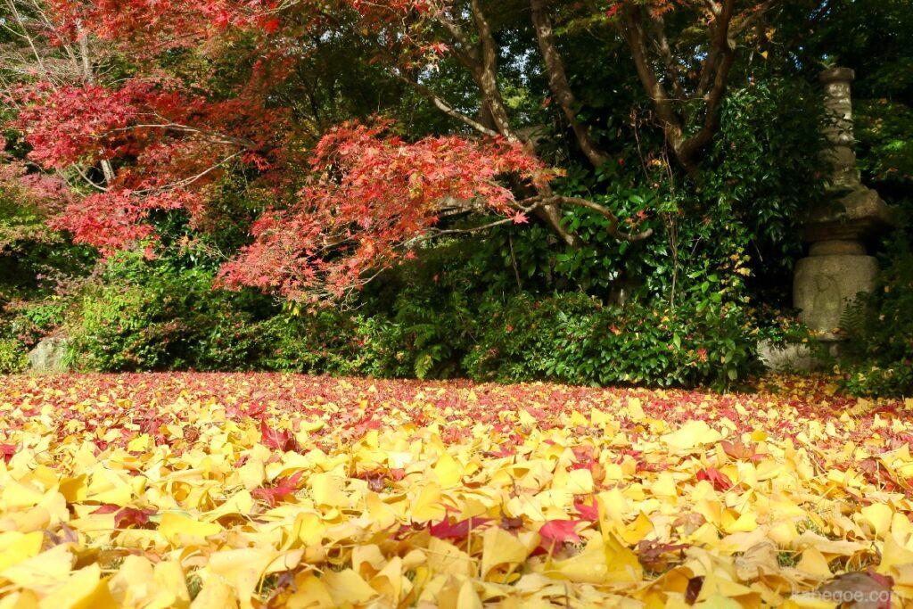 大河内山荘庭園の紅葉