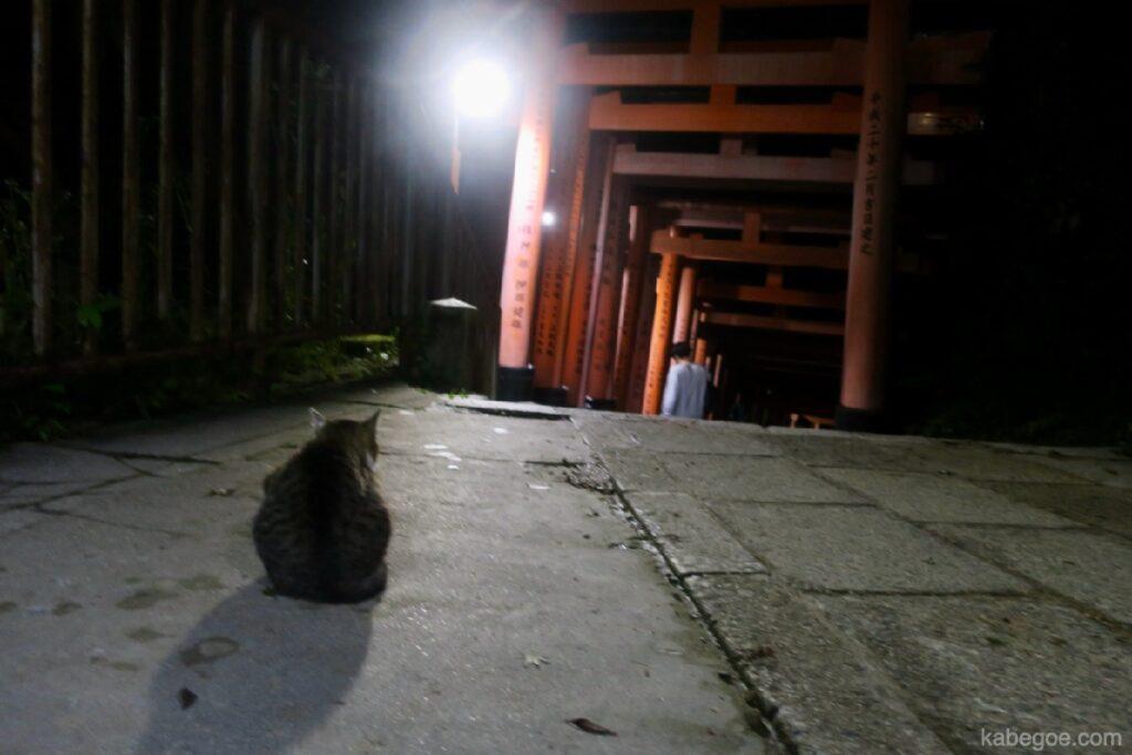 Fushimi Inari Taisha Cat