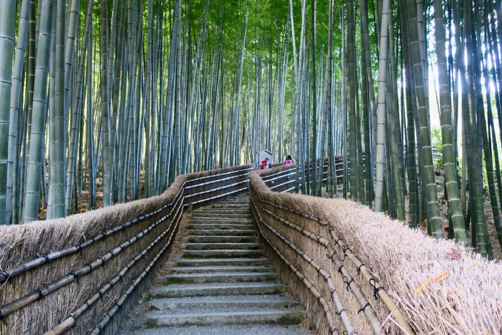 Jalan hutan bambu di Kuil Adashino Nenbutsuji