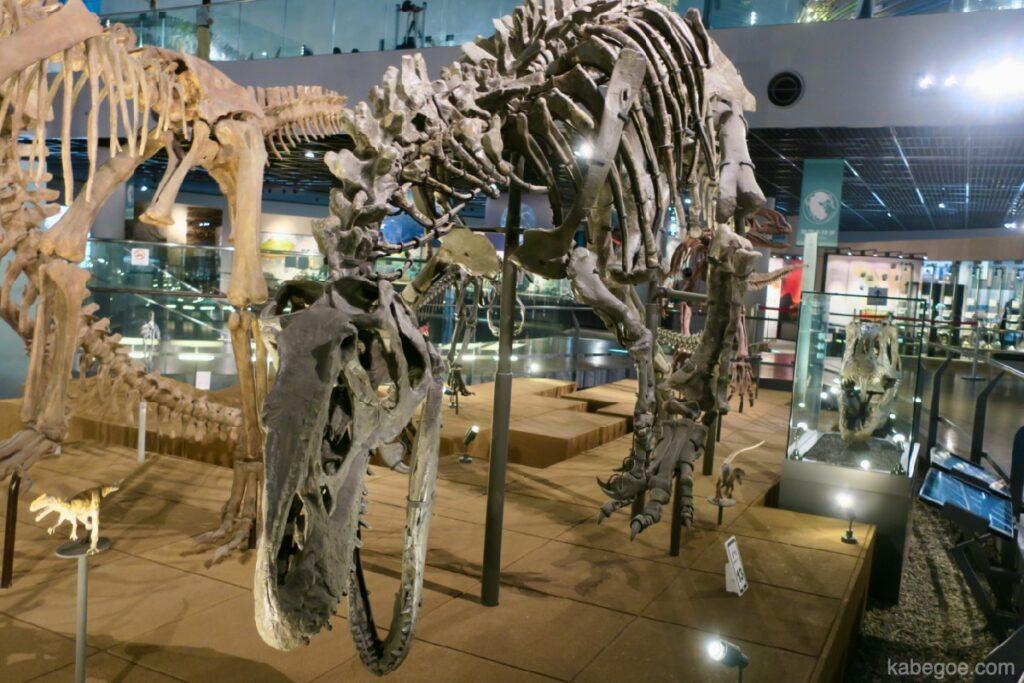 Kerangka seluruh tubuh Museum Dinosaurus Fukui