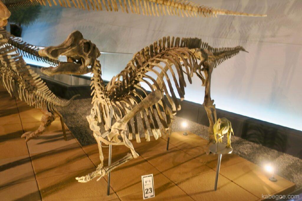 Nipponosaurus di Museum Dinosaurus Fukui