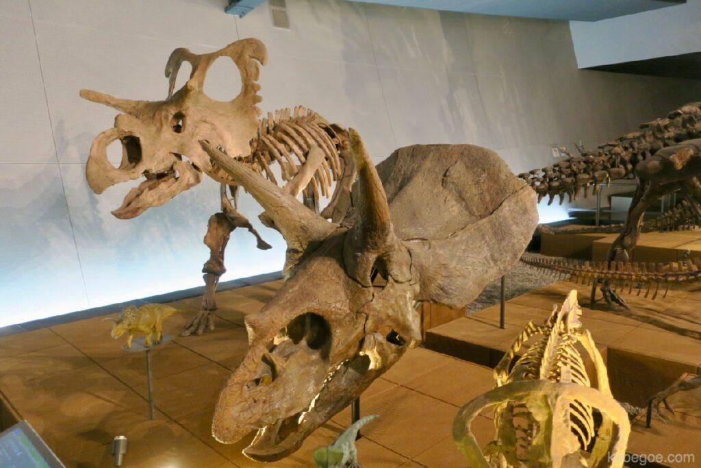 Triceratops di Museum Dinosaurus Fukui
