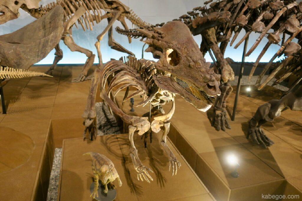 Pachycephalosaurus di Museum Dinosaurus Fukui