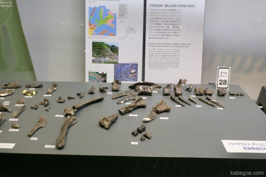 Komentar Pameran Museum Dinosaurus Fukui