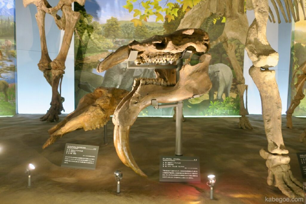 Museum Dinosaurus Fukui Deinotherium